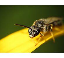 Bee 1 Photographic Print