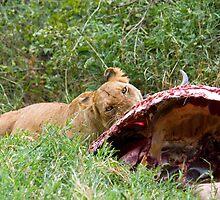 Lioness with her prey 1 by Valerija S.  Vlasov