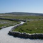 Path to Dún Aonghasa, Aran Islands, Co. Galway, Ireland by Allen Lucas