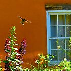 Hummingbird and Garden by gcampbell