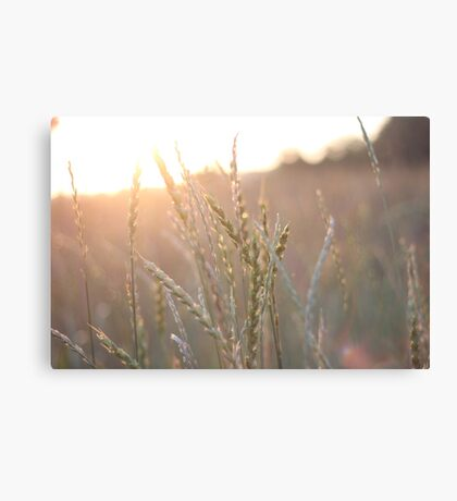 Morning Light Canvas Print