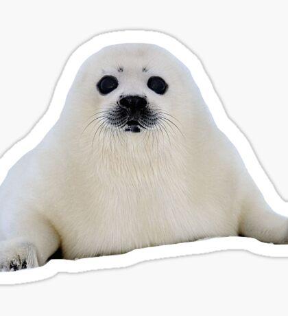 Baby Seal Sticker
