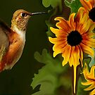 ...HUMMER AND SUNFLOWER SUMMER by RoseMarie747
