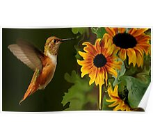 ...HUMMER AND SUNFLOWER SUMMER Poster