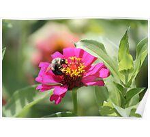 Nectar Gathering Poster