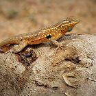 Common Side-blotched Lizard (Male) by Kimberly Chadwick