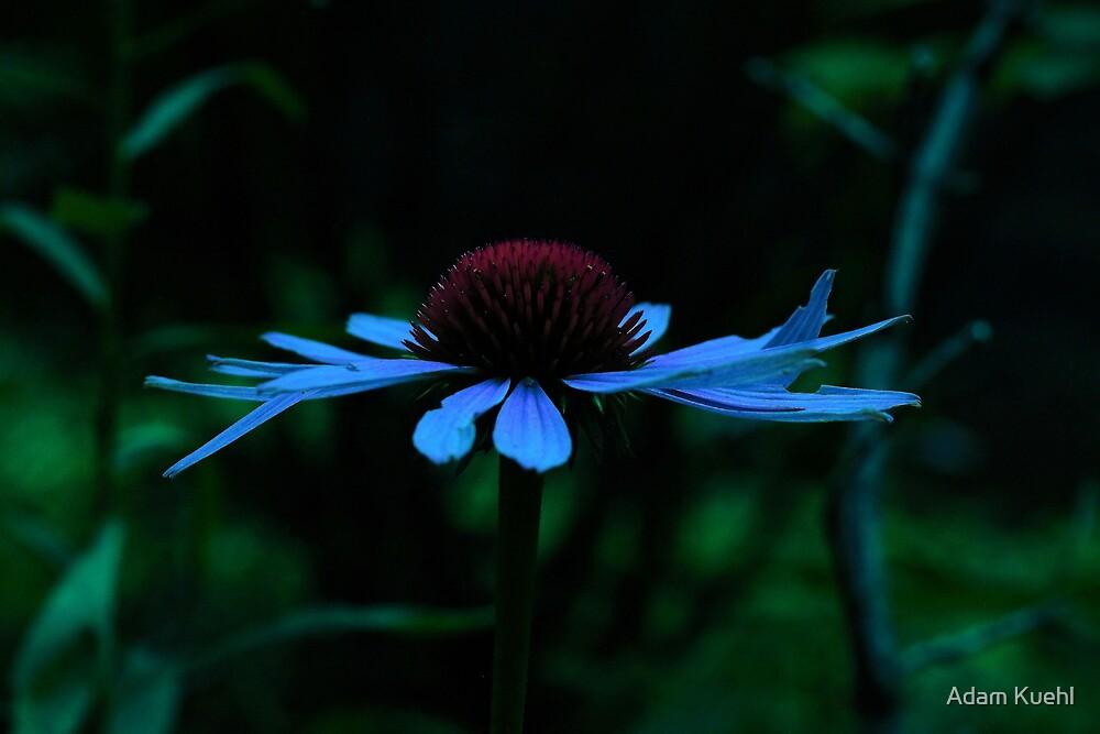 Blue Hued Cone Flower by Adam Kuehl