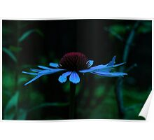 Blue Hued Cone Flower Poster