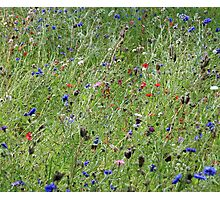 Cotswold Wild Flowers Photographic Print