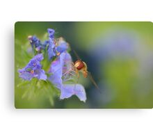 Hoverfly 3    Canvas Print