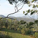 Tallebudgera Valley, QLD by Robyn J. Blackford by aussiebushstick