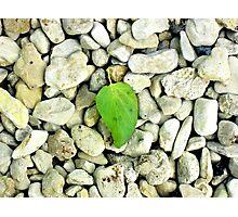 Leaf on Stones Photographic Print