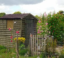 The Garden Shed by Antoinette B