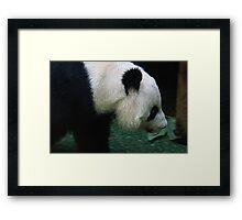 Tian Tian Framed Print