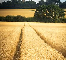 A path through the wheat by Ralph Goldsmith