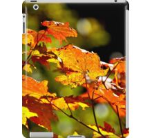 Backlit Vine Maple Leaves iPad Case/Skin