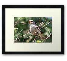 Time to sing Framed Print