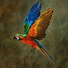 A Flying Rainbow by Tarrby