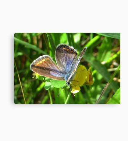 Lovely little Blue Canvas Print