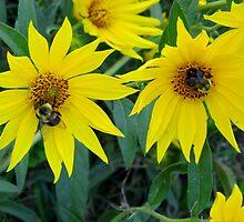 Dual Bees by WildestArt