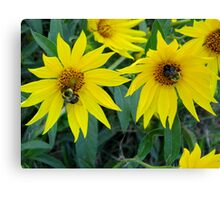 Dual Bees Canvas Print