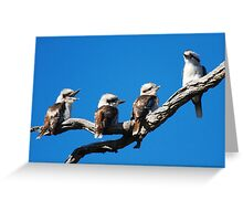 Babies Day  Out  Kookaburra's  Canberra Australia Greeting Card