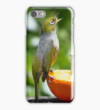 Silver Eye....Singing for my supper.........! iPhone Case/Skin