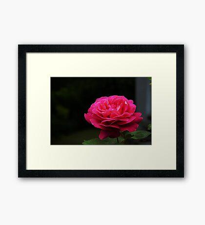 Queen Elisabeth Framed Print