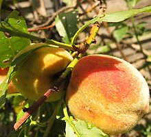 Juicy Peach by MarianBendeth