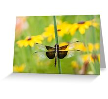 Widow Skimmer Dragonfly in the Backyard Greeting Card