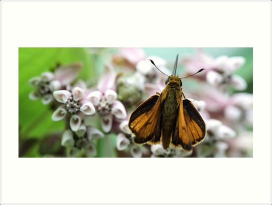 Delaware Skipper - Milkweed Blossom by T.J. Martin