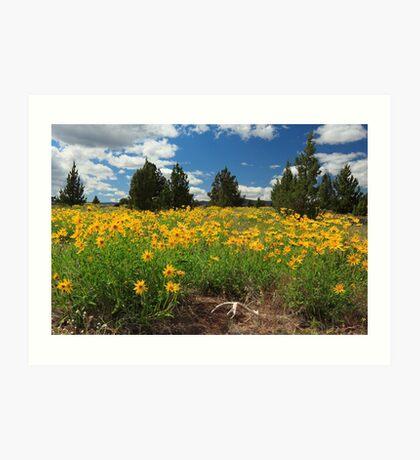Wildflowers Junipers And Antlers Art Print