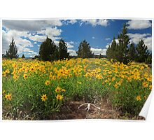 Wildflowers Junipers And Antlers Poster