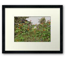 Runner Beans Framed Print