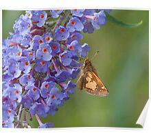Skipper on Butterfly Bush Poster