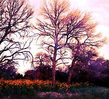Colorado Meadow by ekingrn