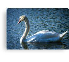 Swan on Lake Canvas Print