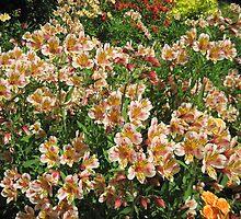 County Wicklow Flowers, Ireland by nilesite