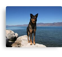 Alex...at Pyramid Lake Suttcliffe Nevada Canvas Print