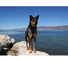 Alex...at Pyramid Lake Suttcliffe Nevada Photographic Print