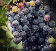 Ready for Harvest by Lucinda Walter