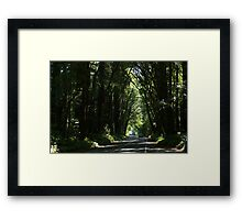 Hwy Redwood Framed Print