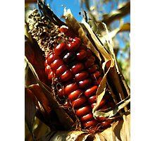 Being Corny Photographic Print