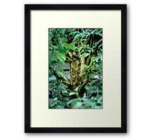 Tree Against an Abandoned Building Framed Print