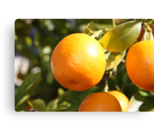 Mini citrus fruit Canvas Print