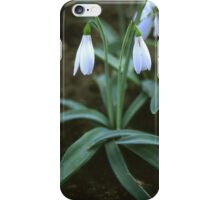 Crimean Snowdrop Closeup iPhone Case/Skin