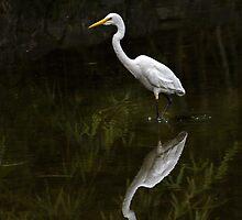 Reflected egret for iPhone by Celeste Mookherjee