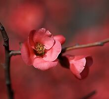 Spring Richness by Joy Watson