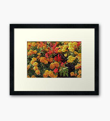 '' FLORA '' Framed Print
