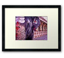 Lakshmi the Elephant Framed Print